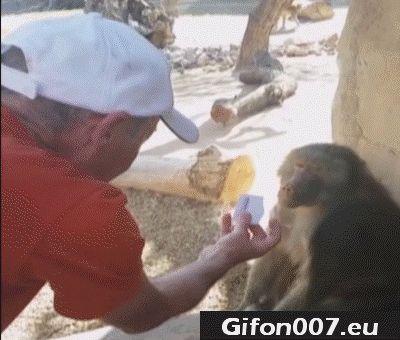 magic, monkey