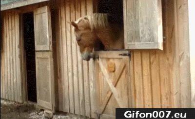 Horse, Open the Door, Gifs, Funny Animals