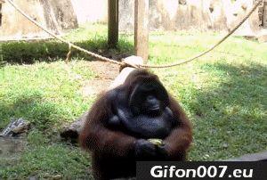 Monkey, Funny, Banana, Eating, Gifs, Zoo