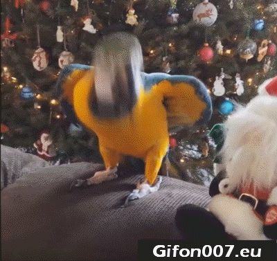 parrot, bird, dance, santa claus, Christmas, tree