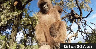 Monkey, Natural Park, Gifs, Gif, GoPro, Camera