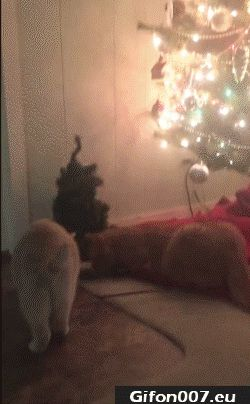 cats-freak-out-christmas-tree-gif-video