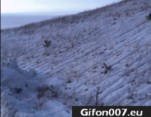 bobsledding-fail-gif-video-snow