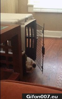Dog, Cage, Playing, Gif, Video, Funny