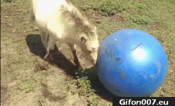 Horse, Fail, Youtube, Gif, Videos, Gym Ball