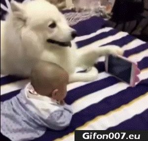 Baby with Dog Watch Film, Video, Gif
