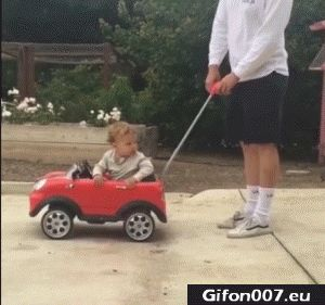 Dog, Child, Drive Car, Video, Gif, Funny