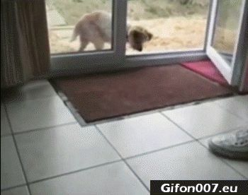 Funny Dog, Cleaning Paws, Video, Gif