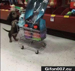 Funny Dog, Video, Shopping Cart, Food, Gif