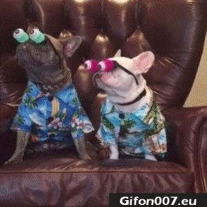 Funny Dogs with Big Eyes, Video, Gif