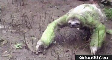 Sloth, Video, Funny, Gif, Youtube