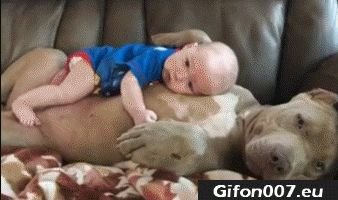 Cute Baby with Dog Sleeping, Video, Gif