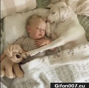 Cute Dog and Baby, Sleeping, Video, Gif
