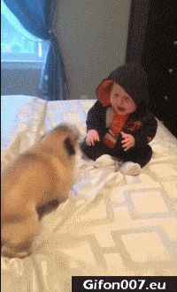 Cute Funny Dog, Playing with Baby, Video, Gif
