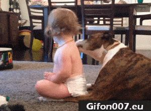 Dog Lick Baby Body, Funny Video, Gif