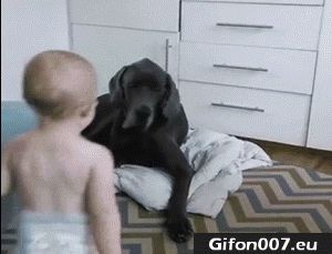 Funny Baby, Dog, Youtube Video, Gif