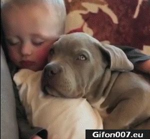 Funny Baby with Dog Sleeping, Video, Gif