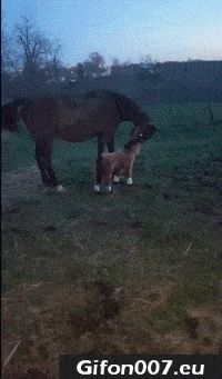Funny Horses, Video, Youtube, Gif