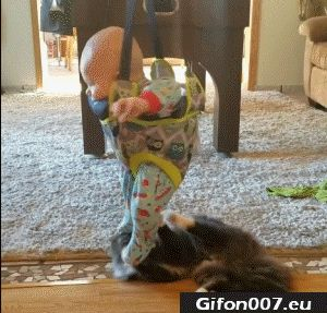 Funny Video, Baby and Cat, Gif