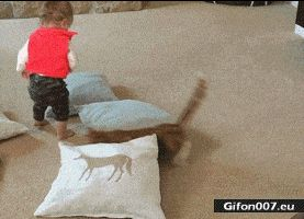 Funny Video, Cat, Child, Fly, Gif