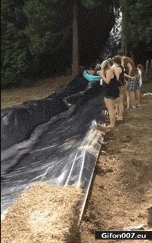 Funny Video, Water Slide, Dog, Fail, Gif