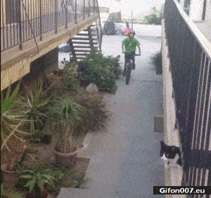 Cat, Riding a Bike, Paw, Hand, Video, Gif