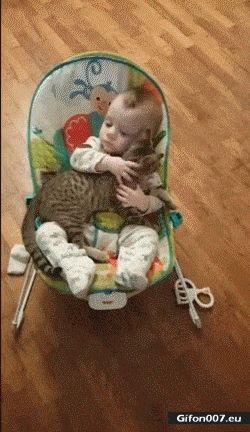Cute Cat and Baby, Video, Gif