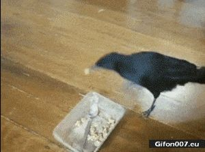 Funny Animals Video, Bird, Dog, Cat, Feeding, Gif