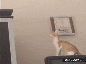 Funny Cat, Jumping Fail, Video, Gif