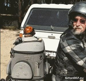Funny Dog on Motorcycle, Helmet, Glasses, Video, Gif