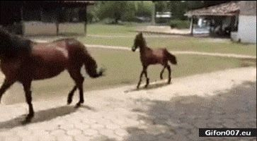 Funny Little Horse, Video, Gif