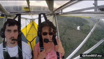 Funny Video, Cat, Aircraft, Wind, Gif