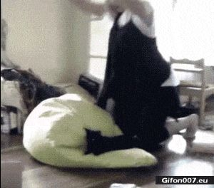 Funny Video, Cat, Flying, Fail, Gif