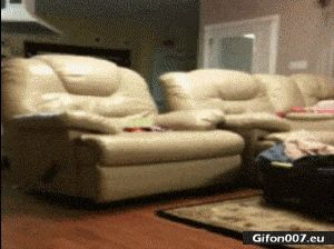 Funny Video, Dog Jumping, Sofa, Woman, Gif