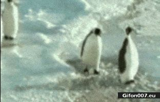 Funny Video, Penguins, Smack, Slap, Gif