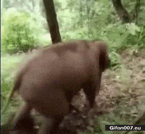 Funny Baby Elephant, Sliding Down, Video, Gif