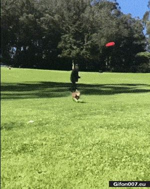 Funny Dog, Jump, Flying Saucer, Video, Gif