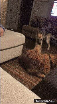 Funny Dogs Video, Youtube, Gif