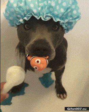 Funny Video, Cute Dog, Having a Shower, Video, Gif