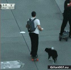 Funny Video, Longboard, Dog, Gif