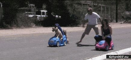 Funny Video, Race, Dogs, People, Gif