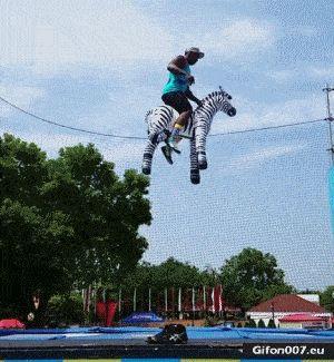 Video, Trampoline, Big Jump, Zebra, Gif