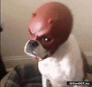Funny Angry Dog, Mask, Video, Gif