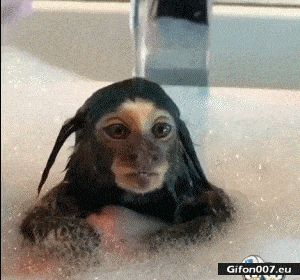 Funny Small Baby Monkey, Video, Gif