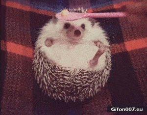 Funny Video, Cute Hedgehog, Eating, Gif