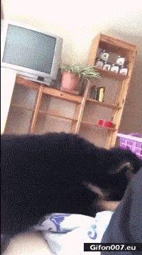 Funny Video, Dog, Sleeping, Get up, Gif