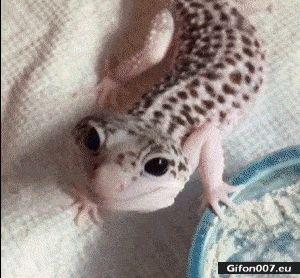 Funny Video, Lizard, Smiling, Gif