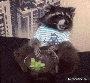 Funny Video, Raccoon, Eating Grapes, Gif