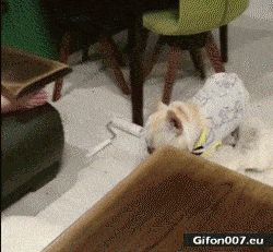 Funny Dog, Go to Sleep, Video, Gif