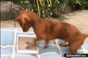Funny Dog, Playing Games, Video ,Gif